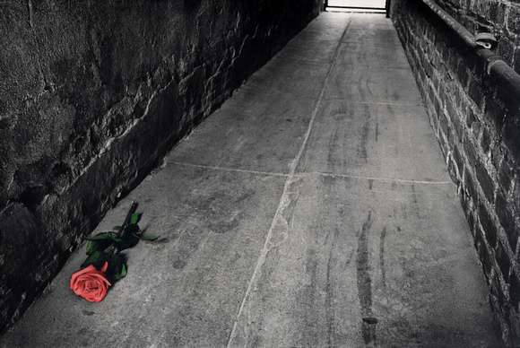 Rose: Bronx Alley #2