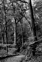 The Old Forest of Manhattan #1 (Alt. Crop)