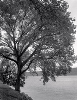 Tree Along Hudson River #2